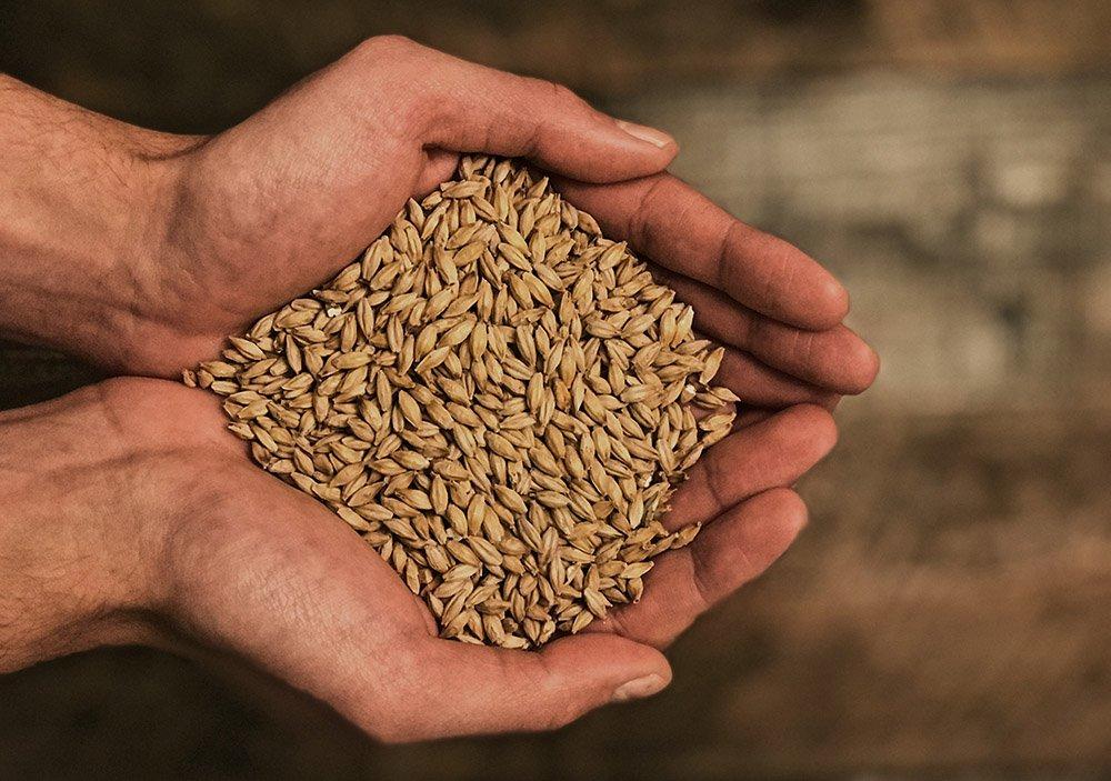 All Grain Brewing MiniBrew