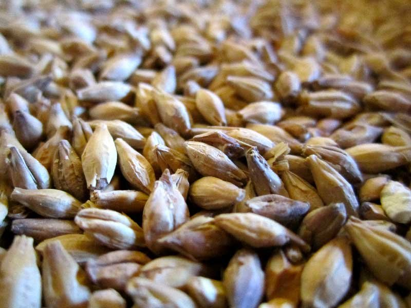 Malt-ingredient